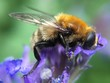 canvas print picture Close-up Of Honey Bee On Purple Flower