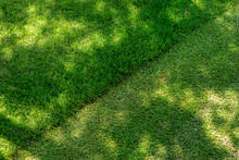 Straigh Diagonal Line Of Mowed Tall Grass At Home Backyard Or City Park. Lawn Trimming Service And Garden Maintenance Concept. Lawnmower Lawn Care Background With Mid Day Shadows