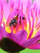 canvas print picture - Detail Shot Of Insect On Flower