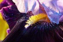 Macro Of Iris Details.