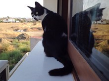 Black Cat Sitting On Window Sill