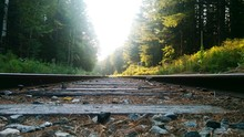 Surface Level Of Railroad Tracks Amidst Trees