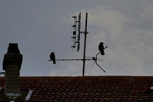 Silhouette Birds Perching On Television Antenna Against Cloudy Sky