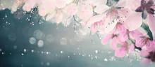 Spring Floral Background, Pink