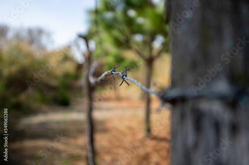 Photo Alambrado de púas en paisaje boscoso