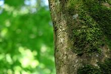 Moss Growing On Tree Trunk
