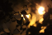 Light Shining Through Autumn Leaves