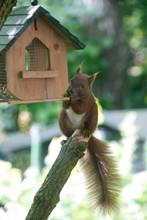 Squirrel On Branch Near Birdhouse