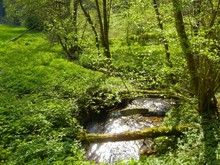 Small Stream Flowing Through Forest