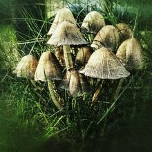 Ink Cap Mushroom Grunge Effect