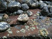 Lichen Covered Rocks On Field