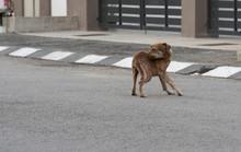 Stray Dog At The Street