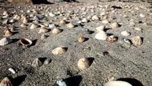 Sea Shells On Sea Shore