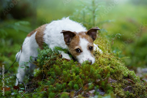 Photo dog in the forest