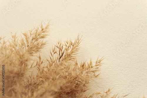 Tablou Canvas Dried natural pampas grass on white surface