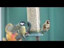 Goldfinch And Great Tit On Fee...