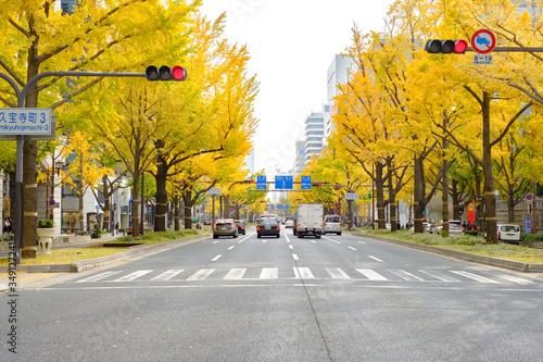 Cuadros en Lienzo Midosuji Boulevard and Ginkgo Trees in Osaka, Japan