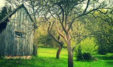 Trees By Old Wooden Shed In Garden