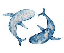 Blue Whales Watercolor Illustration. Hand Drawn Painting  On White Background.