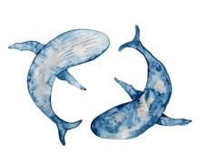 Blue Whales Watercolor Illustr...