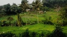 Field On Hillside