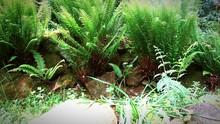 Green Fern Amid Rocks