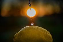 Lemon Washing In Sunset Time.