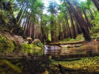 Low Angle View Of Trees By Lake In Forest