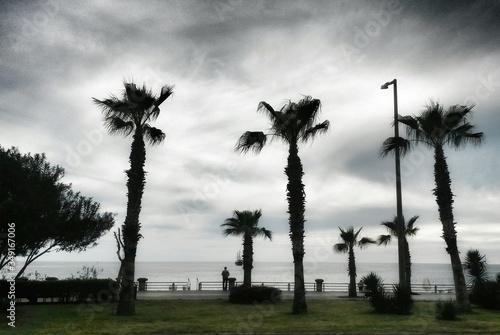 Windswept Palm Trees By Sea Slika na platnu