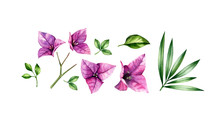 Watercolor Floral Set Of Elements. Pink Bougainvillea Flowers, Tree Branch, Palm Leaves. Hand Painted Floral Tropical Design. Botanical Illustrations Isolated On White