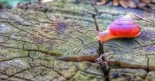 Close-up Of Snail On Tree Stump