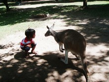 High Angle View Of Boy Crouching By Kangaroo On Field