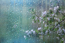 Spring Rain In The Forest, Fre...