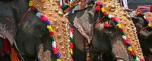 Temple Elephants At A Hindu Fe...