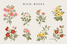 Wild Roses. Yellow, Red, Pink,...