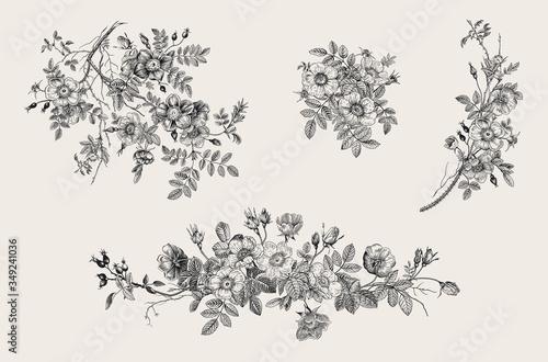 Canvas Print Wild roses