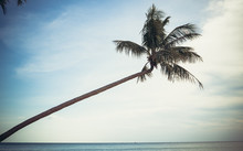 Palm Trees On The Beach On The...