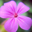 canvas print picture - Close-up Of Pink Flower Blooming Outdoors