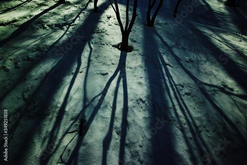 Fototapeta Shadow Of Tree Trunk On Wall