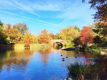 Scenic Shot Of Autumn Trees At Lakeshore