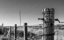 Fence Post Border Perspective