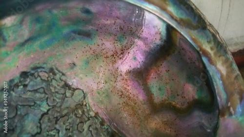 Photo Close-up Of Abalone