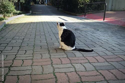 Cat Sitting Amidst Street Fototapet
