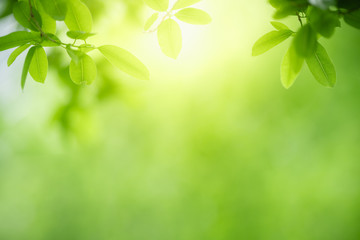 Beautiful nature view of green leaf on blurred greenery background in garden with copy space using as summer background natural green leaves plant landscape, ecology, fresh wallpaper concept.