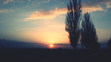 Setting Sun And Two Bare Trees Silhouetted Against Evening Sky