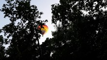 Low Angle View Of Trees And Hot Air Balloon Against Sky