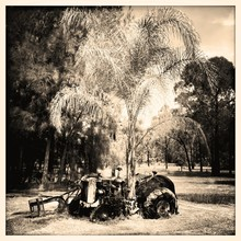 Old Tractor Under Tree