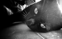 Black And White Image Of A Beautiful Cat