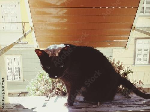 Fotografiet Black Cat Sitting On Window Sill