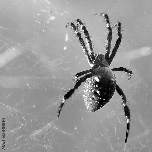 Close-up Of Spider On Web Fototapeta